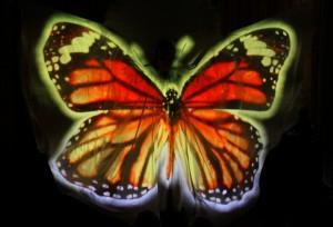 Lady Butterfly 13