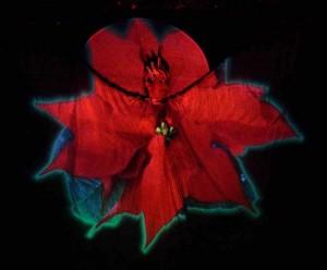 Lady Butterfly 18