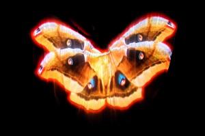 Lady Butterfly 9